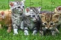 Puzzle Chats